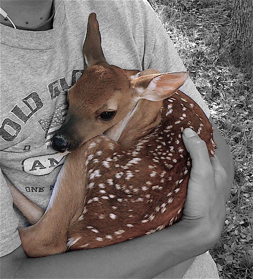 lahara-deer